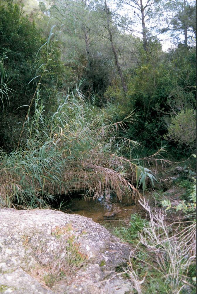 Geografia. Hidrologia. La xarxa hidrogràfica eivissenca és nombrosa, però de curt recorregut, amb cabals de poca durada. Foto: Josep Antoni Prats Serra.