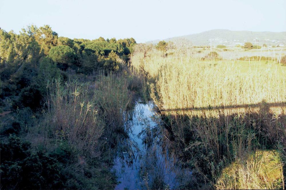 Geografia. Riu de Santa Eulària. En l´actualitat només després de pluges persistents és possible veure córrer l´aigua per aquesta àrea de la plana d´en Guasc, molt prop de la desembocadura. Foto: Josep Antoni Prats Serra.