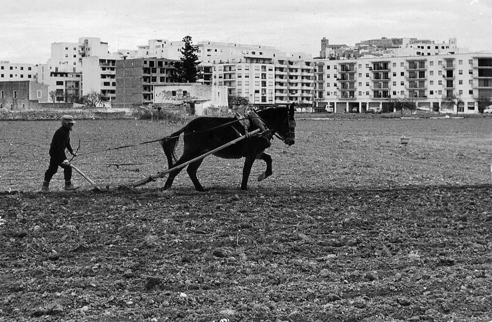 Geografia. Sector primari. Agricultura. Foto: Josep Buil Mayral.