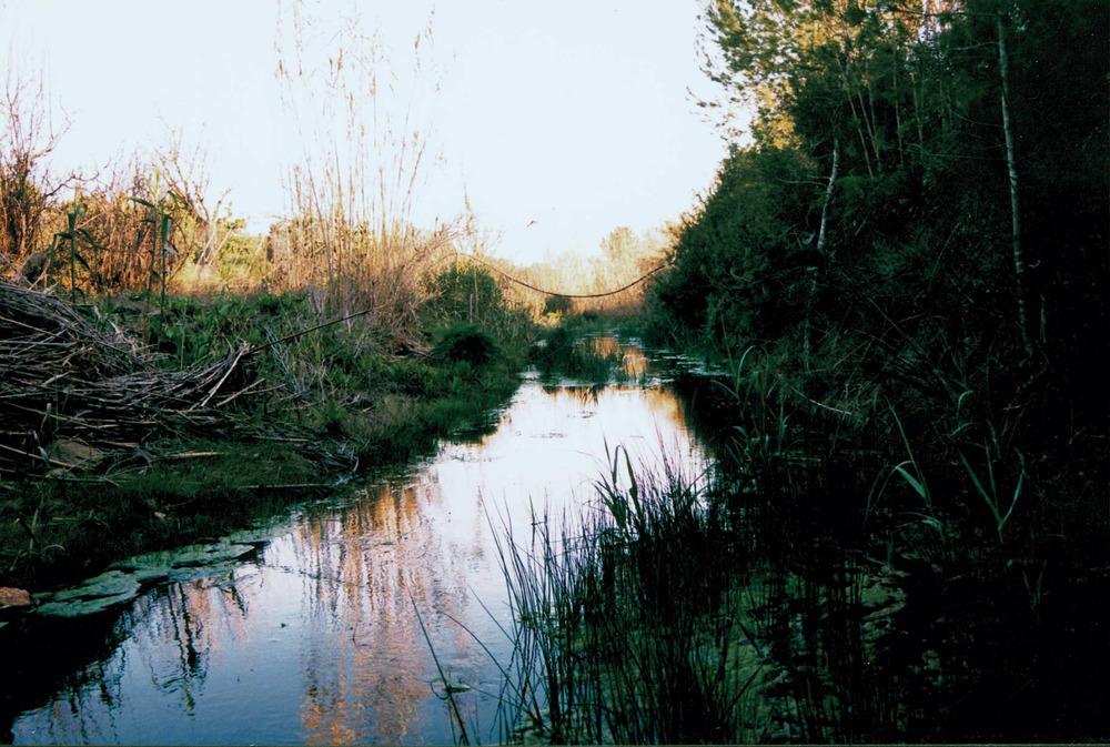 Fauna. Curs mitjà del riu de Santa Eulària, al seu pas per la vénda de Can Llàtzer, Santa Gertrudis; poc després d´aquesta zona, les aigües s´infiltren i deixen la llera seca gairebé de manera permanent. Foto: Josep Antoni Prats Serra.