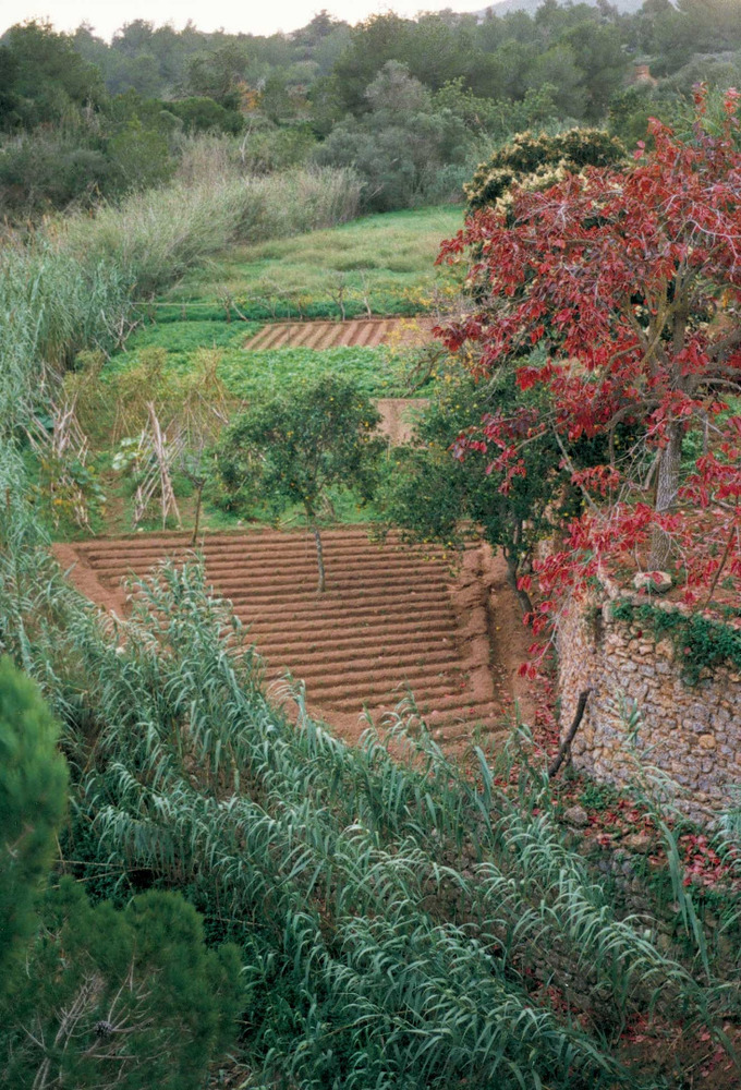 Època andalusina. Un dels horts que es rega amb aigua d´un torrent. Moltes de les zones d´Eivissa que tradicionalment han estat de regadiu tenen el seu origen a l´època andalusina. Foto: Antoni Ferrer Abárzuza.