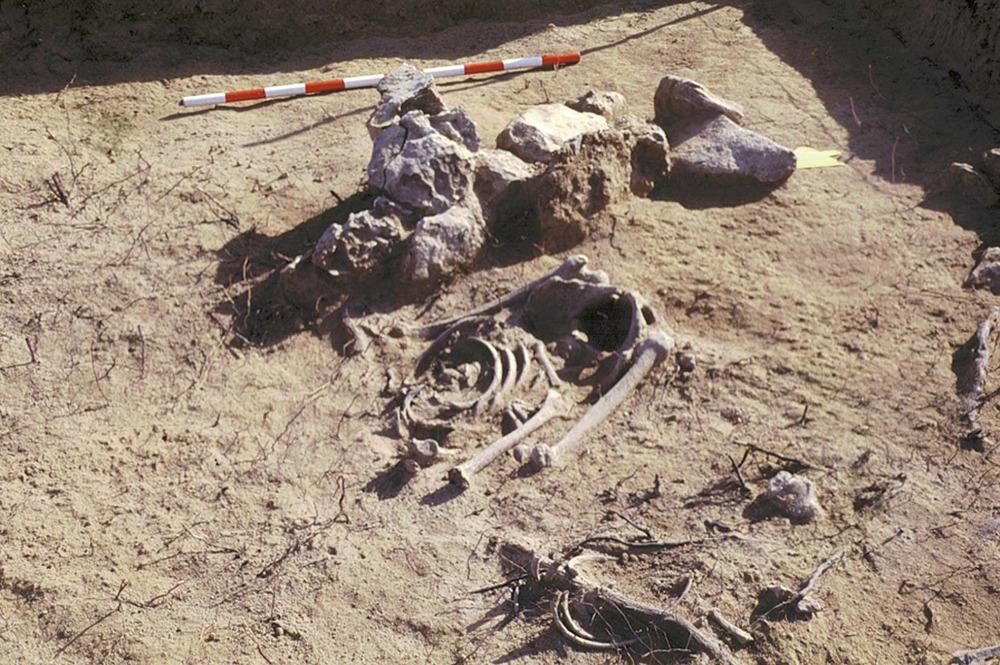 S´Espalmador. Restes òssies, segurament del s. XVI, trobades el 1996 vora sa Torreta. Foto: Jordi H Fernández Gómez.