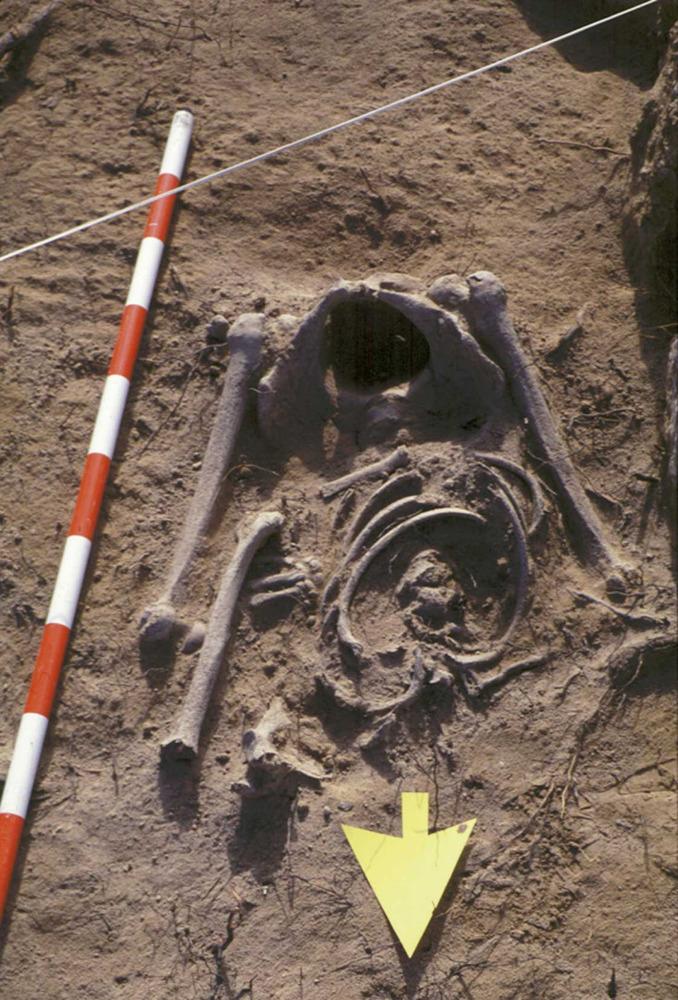 S´Espalmador. Restes òssies, segurament del s. XVI, trobades el 1996 vora sa Torreta. Foto: Ana Mezquida Orti.