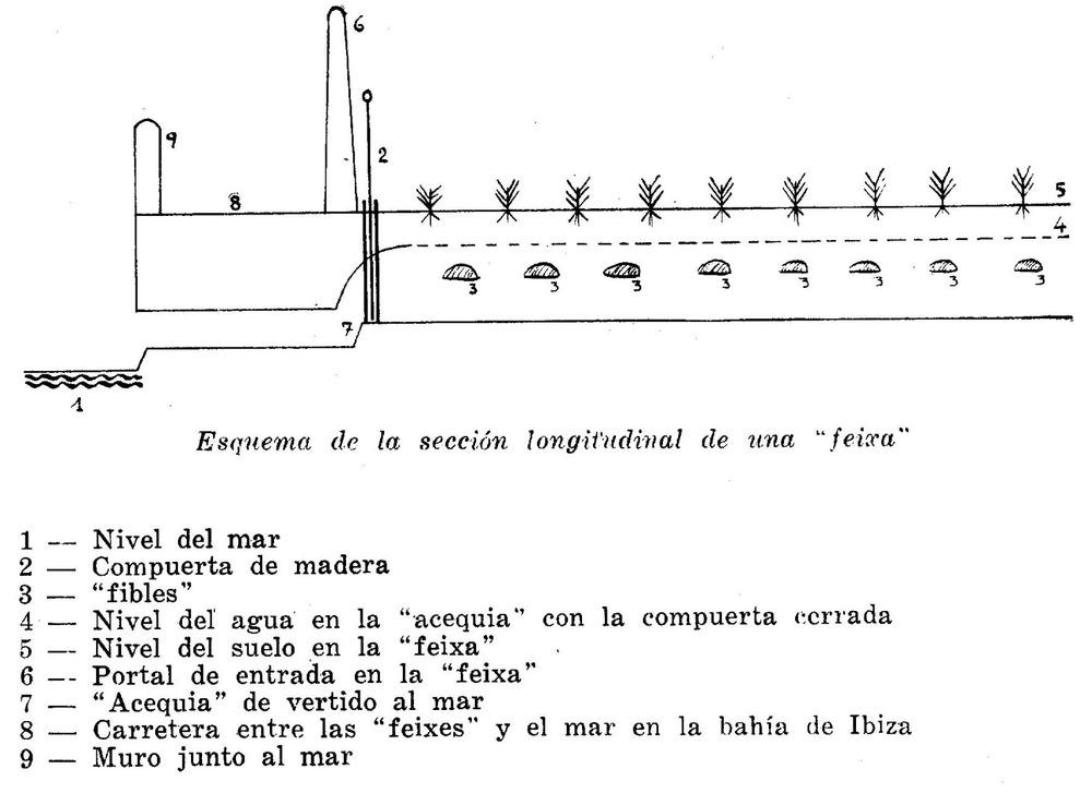 Esquema de la secci&oacute; longitudinal d´una feixa, segons el farmac&egrave;tic Bartomeu Mar&iacute;. Extret d´<em>Ibiza e islotes adyacentes</em>.