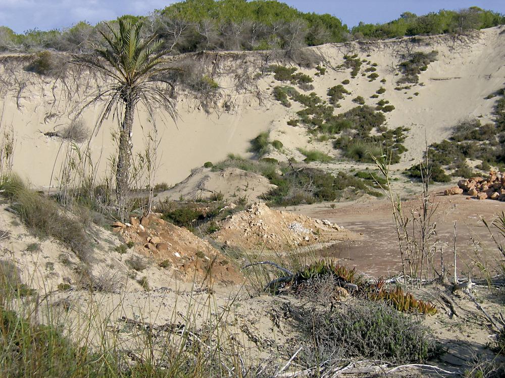 Areny de ses Clotades, a la zona des Arenals. Foto: Vicent Ferrer Mayans.