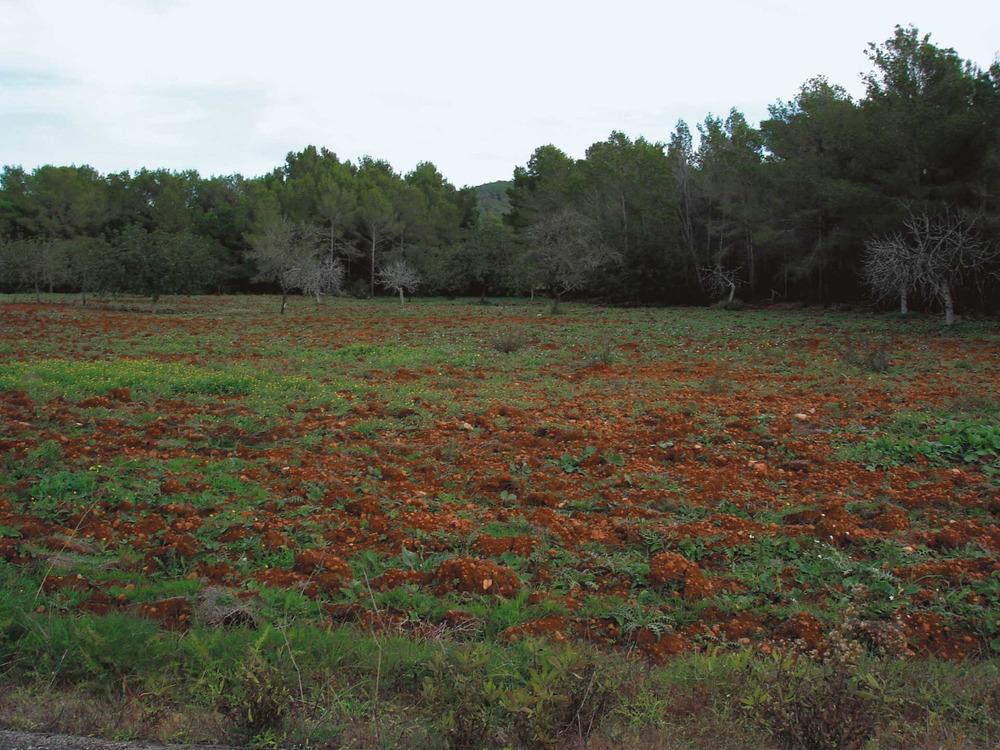 Un altre paisatge de la vénda des Novells i des Trull d´en Vic. Foto: Josep Antoni Prats Serra.