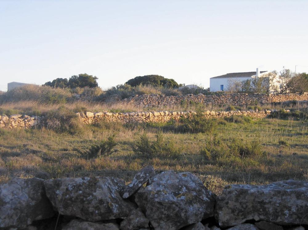 Vénda de sa Punta. Camps de conreu semiabandonats al S de la vénda. Foto: Vicent Ferrer Mayans.