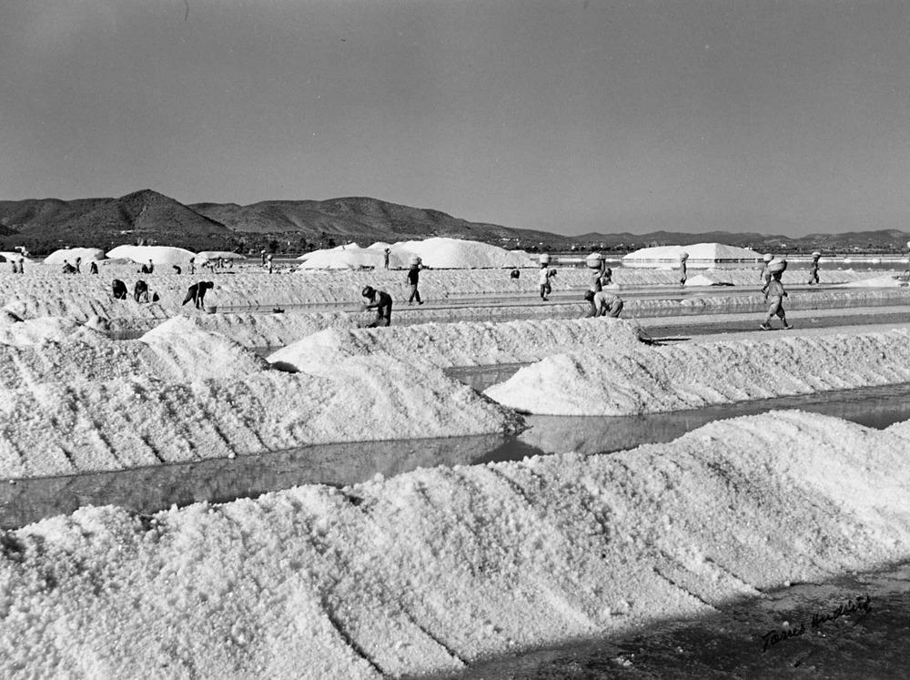 Ses Salines. Els cavadors, amb el cap de colla que manejava el tiràs, formaven els cavallons de sal. Foto: Josep Torres Andiñá / Arxiu d´imatge i so del Consell d´Eivissa.