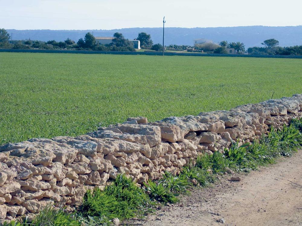 Camps de conreu vora el camí Vell de la Mola, a l´extrem SE del poble de Sant Ferran de ses Roques. Foto: Vicent Ferrer Mayans.