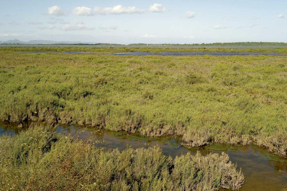 Sant Francesc Xavier. Zones humides a la riba meridional de l´estany Pudent, a la zona coneguda com es Brolls. Foto: Joan A. Parés.