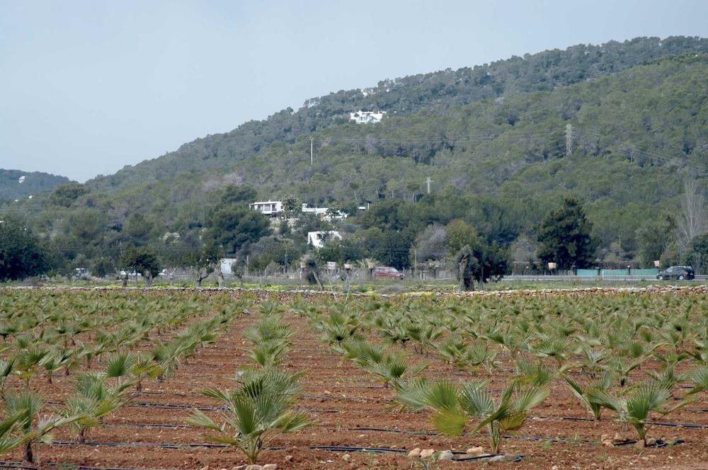 Sant Jordi de ses Salines. Explotació agrària destinada al cultiu de plantes ornamentals. Foto: Chus Adamuz.