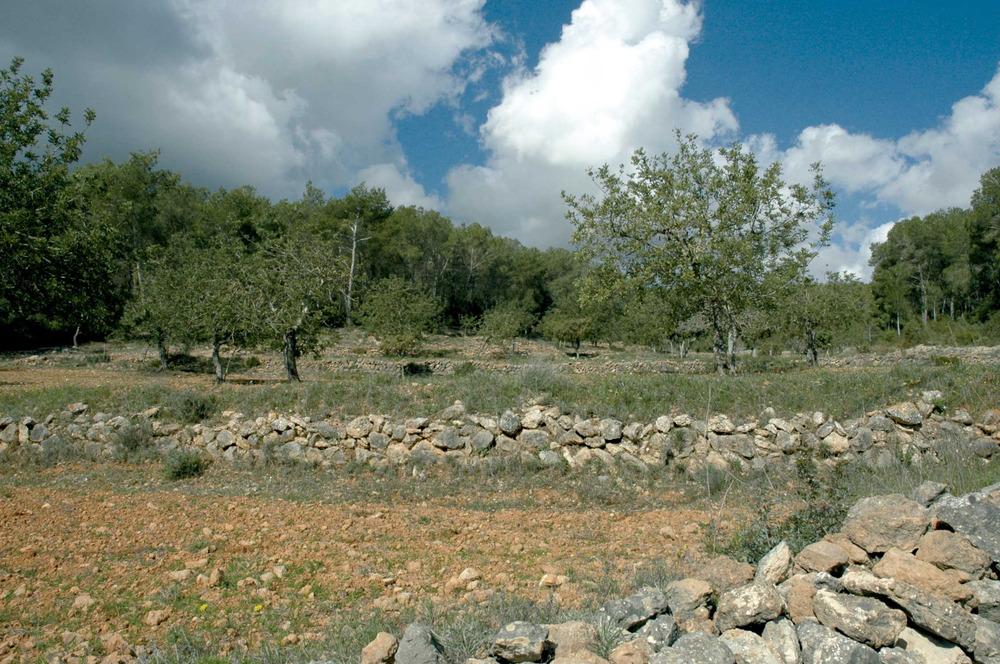 Sant Jordi de ses Salines. Es Rafal Trobat, amb els marges als vessants muntanyencs, per tal d´evitar l´erosió. Foto: Chus Adamuz.