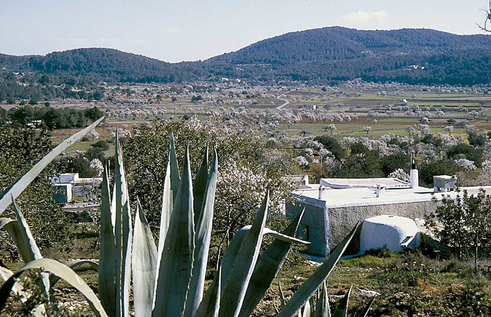Sant Mateu d´Albarca. El pla d´Albarca, amb ametllers i vinya com a cultius principals. Foto: Chus Adamuz.