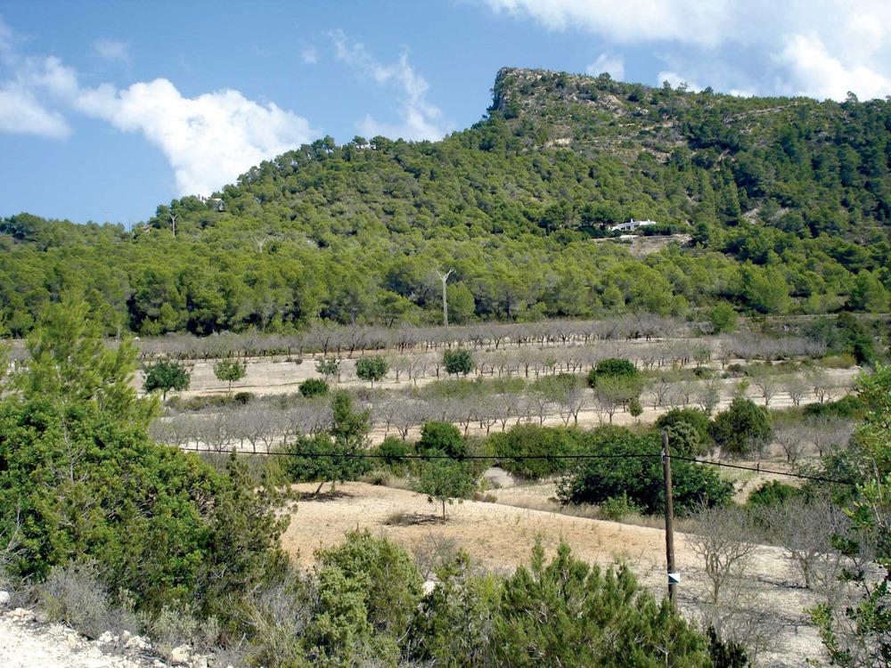 Sant Vicent de sa Cala. Plantació d´ametllers al vessant de sa Talaia, a la vénda de Cas Negres. Foto: Vicent Marí Costa.