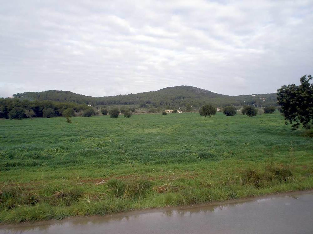 Municipi de Santa Eulària des Riu. La plana d´en Vidal, a Santa Gertrudis de Fruitera. Foto: EEiF.