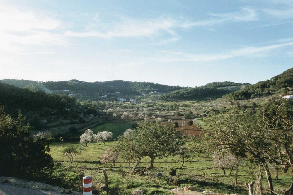 L´ametller és un dels arbres fonamentals per a la introducció de l´agricultura dins el mercat d´intercanvis per cultius especialitzats. Camí de Benimussa. Foto: Gerard Móra Ferragut.