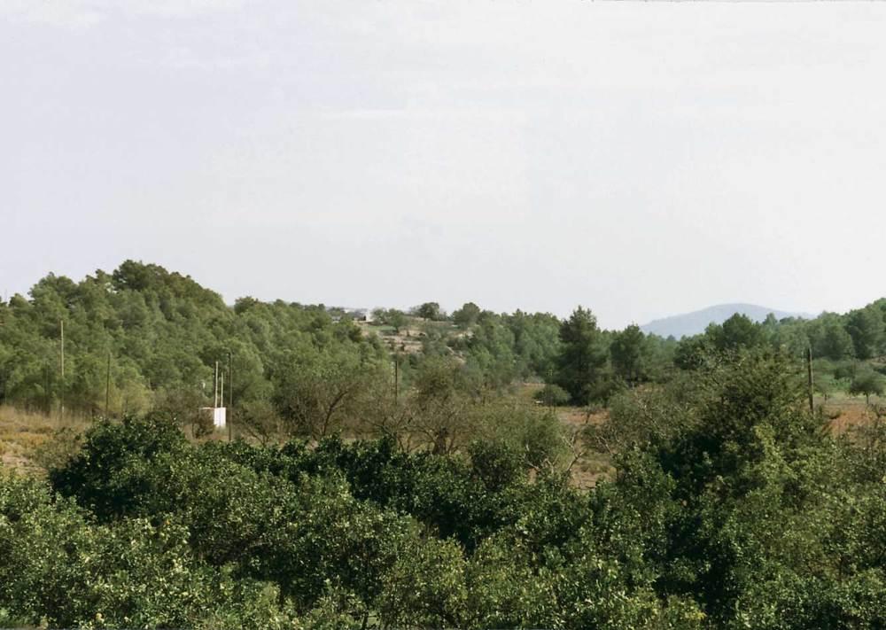 Els fruiters de reguiu tenen una certa importància dins l´agricultura actual. Sant Llorenç de Balàfia. Foto: Gerard Móra Ferragut.