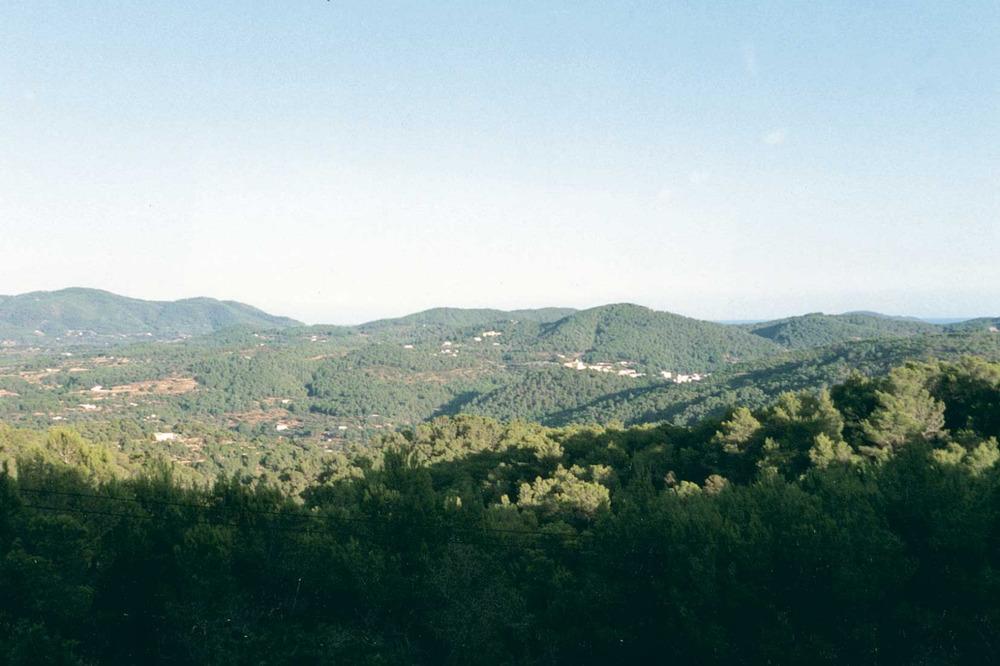 Agricultura. Més d´un trenta per cent de la superfície de les Pitiüses és actualment espai boscós. Rubió. Foto: Gerard Móra Ferragut.