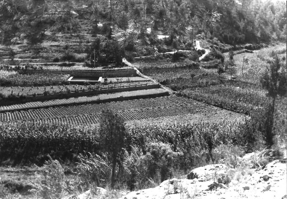 Agricultura. Policultiu de reguiu a la vall del torrent de Balansat o de Sant Miquel (1981). Foto: Rosa Vallès Costa.