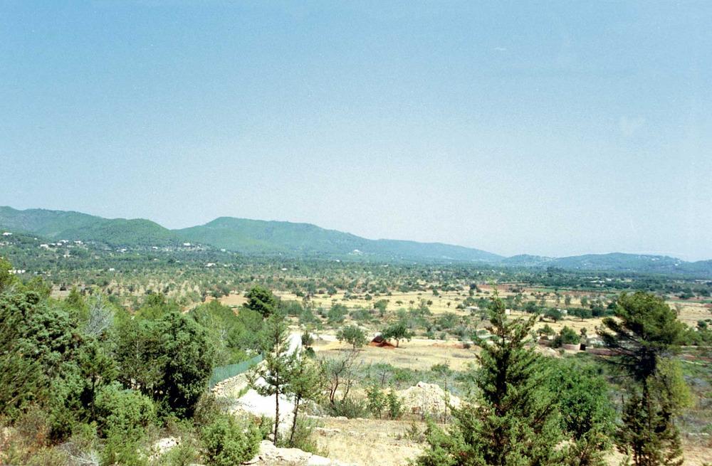 Agricultura. Camí de Perella. Es pot comprovar la importància dels cultius llenyosos, arbres de secà, a les Pitiüses. Foto: Gerard Móra Ferragut.
