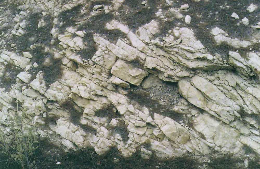 Calcàries blanques, molt rompudes, del cretaci superior, a la part alta de cala Llentrisca, en estratificació ben marcada i prou fina. Foto: Bartomeu Escandell Prats.