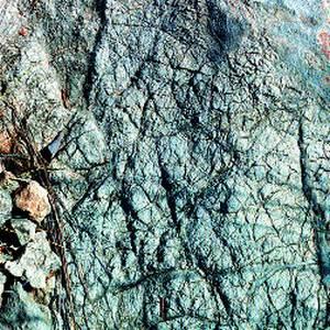 Superfície de les dolomies de l´Aalenià. L´erosió produeix un dibuix similar a la pell d´un elefant. Foto: Bartomeu Escandell Prats.