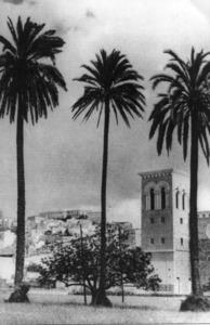 Les palmeres de ses Canyes, molt prop de l´hort del Bisbe, devers els anys setanta.