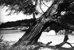 El pouet Blanc, a l´arenal Petit de Portinatx, en una imatge dels anys setanta. Foto: J. Gomis.