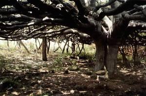 Na Blanca d´en Ferrer. Extret d´<em>Illa al sud, un centre de vacances... a Formentera</em>.