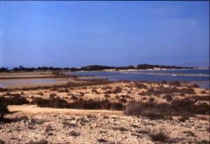 Es Bol Fondo, a l´estany des Peix de Formentera. Foto: Enric Ribes i Marí.