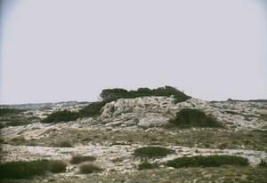 El pujolet des Borons, amb la savina, al N de l´illa de Formentera. Foto: Enric Ribes i Marí.