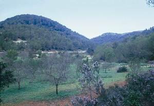 Vénda de Buscastell. Terrenys de la canalada de sa Coma, que formen part de dita vénda, forta de la vall de Buscastell. Foto: ERM/JPS.
