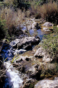 El torrent d´en Calbet. Foto: Joan Costa-Hoevel Schwab.