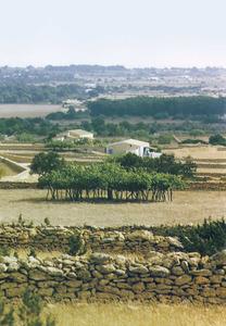 Vénda des Cap de Barbaria. Una vista general del pla. Foto: Andreu Ferrer Juan.