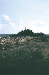 Es Capparet, a Formentera, prop de l´estrany des Peix. Foto: Enric Ribes i Marí.