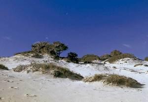 Dunes a la platja des Cavallet. Foto: Enric Ribes i Marí.
