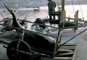 Geografia. Sector primari. Una altra imatge relacionada amb la pesca. Foto: Joan Costa-Hoevel Schwab.