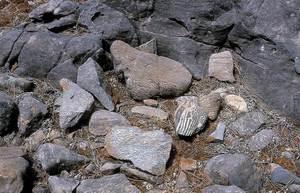 Geologia. Detall de dolomies i calcàries dolomítiques amb el característic bandat anomenat fàcies zebra. Foto: Xavier Guasch Ribas.
