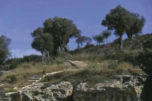 Amb el nom d´Eresos, Diodor de Sicília designà la ciutat d´Eivissa i, per extensió, alguns historiadors aplicaren aquest nom al puig des Molins i parlen de la necròpolis d´Ereso. Foto: Vicent Marí.