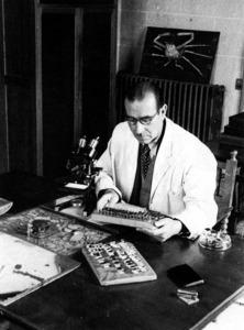 L´entom&ograve;leg Francesc Espa&ntilde;ol i Coll, que va realitzar diversos estudis sobre zoologia de les Piti&uuml;ses. Extret de<em> Treballs del Museu de Zoologia - Obra taxon&ograve;mica del Dr. Francesc Espa&ntilde;ol</em>.