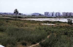 El sector de ses Feixes conegut com es prat de Vila, que es troba pràcticament desaparegut. Foto: Rosa Vallès Costa.
