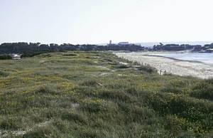 Formentera. Flora. Vegetació dunar a la platja d´Illetes. Foto: Pepa Planells.
