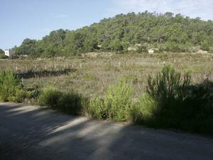 Una imatge del pla de ses Formigues, pòlie d´origen càrstic situat a la vénda de Cas Rierons, Sant Vicent de sa Cala. Foto: Felip Cirer Costa.
