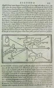 Gimnèsies fou el nom donat pels antics grecs a Mallorca i Menorca, i que Aviè també adjudicà a l´illa d´Eivissa. Cortesia de l´Arxiu Històric Municipal d´Eivissa.
