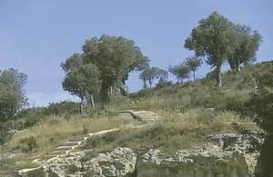 Carlos Benito González de Posada y Menéndez fa referència a algunes troballes arqueològiques al puig des Molins, a començament del s. XIX. Foto: Vicent Marí.