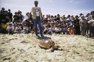 Retorn a la mar d´una tortuga que s´havia ferit amb hams de palangre. Foto: Beni Trutmann.