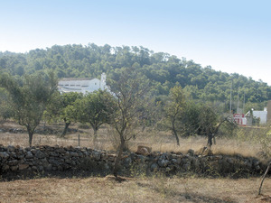 Es Malesar, nom antic del puig d´en Tonió, vora l´església del poble de Sant Mateu d´Albarca. Foto: Felip Cirer Costa.