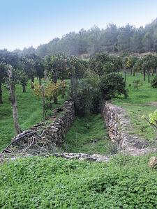 Inici del torrent d´en Miquelet, a la vénda de Cas Serres, Santa Gertrudis. Foto: Felip Cirer Costa.