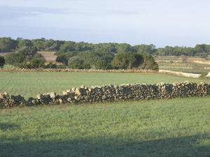 Vénda de la Miranda-Cala Saona: terços al racó N de cala Saona. Foto: Vicent Ferrer Mayans.