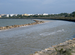 Riba oriental de l´estany Pudent, que també ha donat nom a la vénda des Molí-s´Estany. Foto: Vicent Ferrer Mayans.